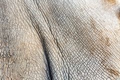 Текстура кожи крупного плана белого носорога Стоковое Изображение RF