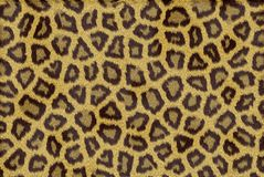 текстура кожи леопарда Стоковое Изображение