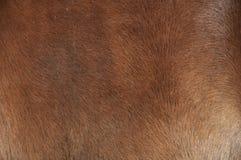 Текстура кожи лошади стоковые изображения rf