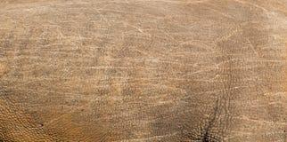 Текстура кожи носорога стоковое изображение rf