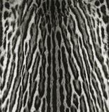 Текстура шерсти оцелота Стоковое Фото