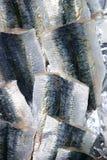 текстура кожи сардины рыбного базара выкружки Стоковая Фотография
