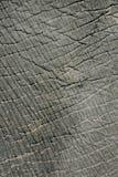 текстура кожи слона Стоковая Фотография RF