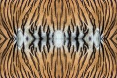 Текстура кожи тигра Стоковая Фотография RF