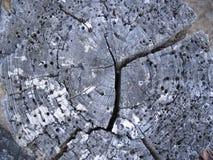 Текстура колец деревянного поперечного сечения стоковое изображение