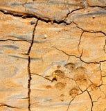 текстура конспекта Лансароте Испании шага Стоковое Фото
