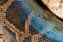 Текстура конца-вверх кожи питона Стоковые Изображения RF
