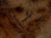 Текстура конца дикого животного меха вверх Стоковые Фото