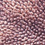 текстура коралла Стоковые Фото