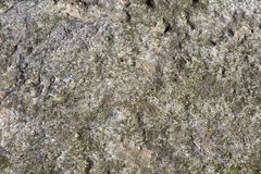 Текстура коралла в солнце после полудня Стоковое Фото