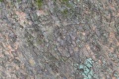 Текстура 3722 - кора дерева Стоковая Фотография