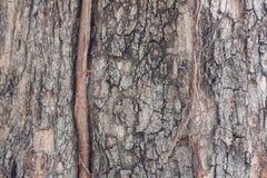 Текстура коры дерева старое дерево Стоковые Изображения RF