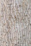 Текстура коры дерева с светлыми цветами Стоковая Фотография