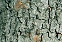 Текстура коры дерева цвета Стоковые Фото