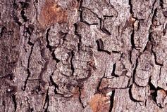 Текстура коры дерева цвета Стоковое Изображение RF