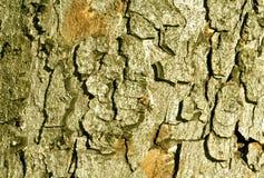 Текстура коры дерева цвета Стоковая Фотография RF