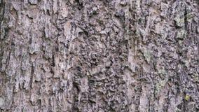 Текстура коры дерева для предпосылки Стоковая Фотография