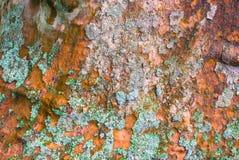 Текстура коры дерева Platan Стоковые Изображения RF