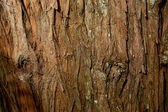 Текстура коры дерева Totara Стоковые Фото