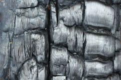 Текстура, который сгорели древесины Стоковые Изображения