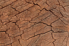 Текстура колец дерева в дереве Стоковое фото RF