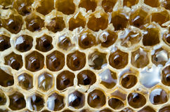 Текстура крапивницы пчелы при заполненный мед Стоковые Изображения