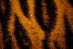 Текстура красивого меха тигра красочная с апельсином, бежом, желтым цветом и чернотой Стоковое фото RF