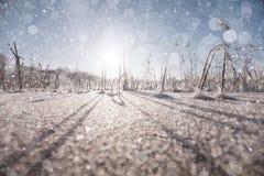 Текстура кристаллов заморозка Стоковая Фотография RF