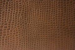 текстура крокодиловой кожи стоковые фотографии rf
