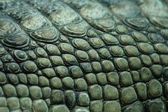 текстура крокодила Стоковая Фотография RF