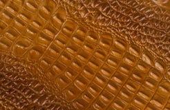 Текстура крокодиловой кожи Брайна Стоковое Изображение RF