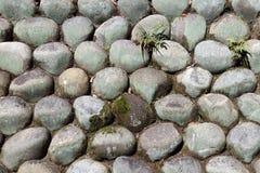 Текстура круглого камня штабелированная к стене с заводом папоротника и зеленым thallophytic заводом Стоковое Фото
