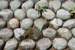 Текстура круглого камня штабелированная к стене с заводом папоротника и зеленым thallophytic заводом Стоковые Фото