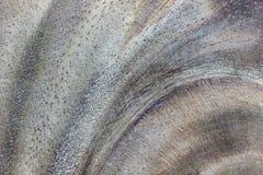 Текстура крупного плана древесины Соответствующий для делать предпосылки Стоковая Фотография RF