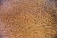Текстура крупного плана коричневого цвета волос собаки Стоковая Фотография