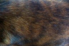 Текстура крупного плана коричневого цвета волос собаки Стоковая Фотография RF