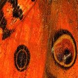 Текстура крыла бабочки Стоковое Фото