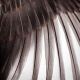 Текстура крыла птицы Стоковое Фото