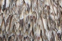 Текстура крыши соломы стоковые фотографии rf