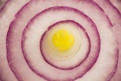 Текстура куска фиолетового лука Стоковые Изображения RF