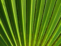 текстура ладони листьев Стоковые Фото
