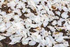 Текстура лепестков белых цветений яблока стоковые изображения