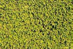 текстура листва Стоковые Фотографии RF