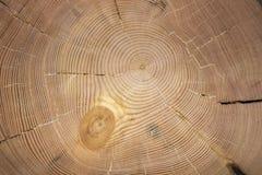Текстура лиственницы стоковое изображение rf