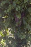 Текстура листвы весны подсвеченного дерева Стоковое фото RF