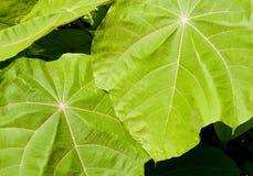 текстура листьев джунглей стоковые фото