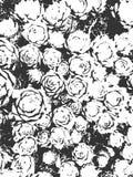 Текстура листьев и роз Предпосылка вектора заводов Верхний слой Grunge Стоковая Фотография RF
