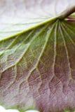 Текстура листьев лотоса Стоковые Фотографии RF