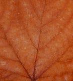 текстура листьев осени Стоковые Изображения RF
