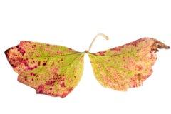 текстура листьев падения детали Стоковое Изображение RF